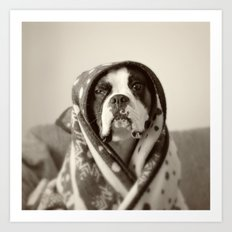 Obi Wan (Buck the world's most lovable boxer dog) Art Print