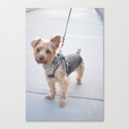 Baby Dog Canvas Print