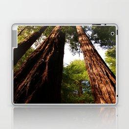 Redwood Tree Tops Laptop & iPad Skin