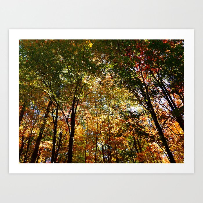 Through the Trees in October Art Print