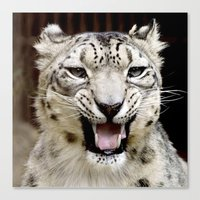 snow leopard Canvas Prints featuring Snow Leopard by MehrFarbeimLeben