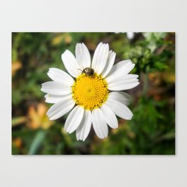 Magic Field Summer Grass - Chamomile Flower with Bug - Macro Canvas Print
