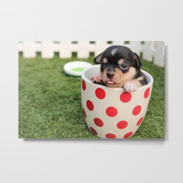 Chihuahua Puppy in a Teacup Metal Print