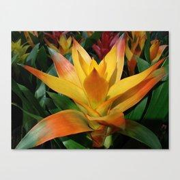 Orange guzmania tropical flower Canvas Print
