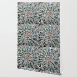 TEXTURES -- Coast Barrel Cactus Wallpaper