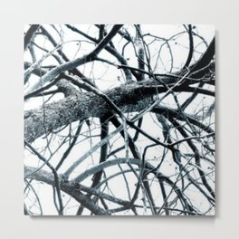 Winter Trees #photography #outdoor #nature Metal Print