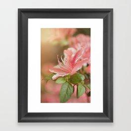Spring's eruption Framed Art Print