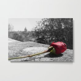 A rose in Rome, Italy Metal Print