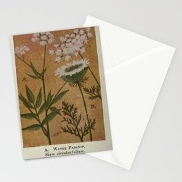 Flower WATER PARSNIP WILD CARROT QUEEN ANNE S LACE12 Stationery Cards
