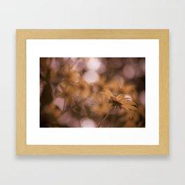 Rudbeckia 2 Framed Art Print