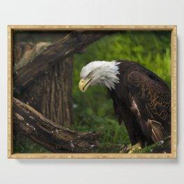Bald Eagle Portrait Serving Tray