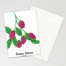 Rasberry Stationery Cards