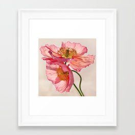 Like Light through Silk - peach / pink translucent poppy floral Framed Art Print