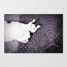 Animal :: Catfish Canvas Print