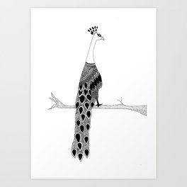 Peacock- Zentangle Art Print