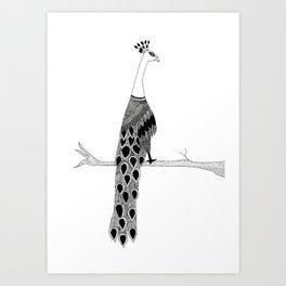 Peacock- Zentangle Art Print