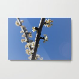 Fruit Blossoms II Metal Print