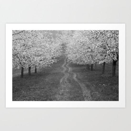 Cherry Trees Art Print