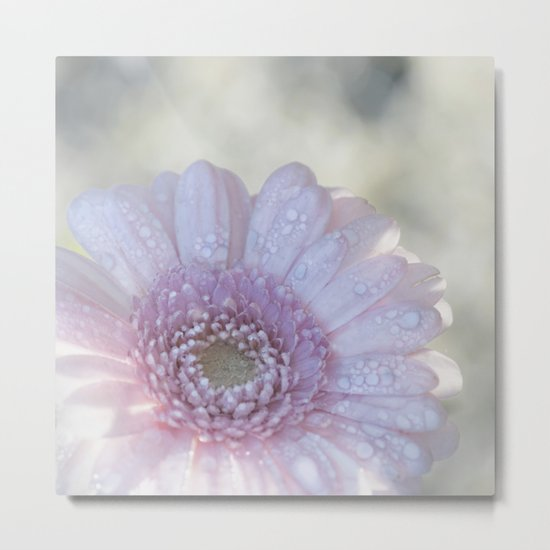 Pink Daisy with Waterdroplets in Backlight- Flower- Flowers- Floral Metal Print