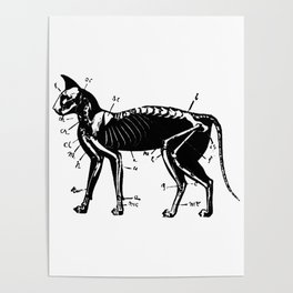 Cat Skeleton Anatomy Poster