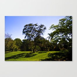 Another Tree Canvas Print