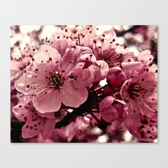 Spring Pink Plum Blossoms Canvas Print