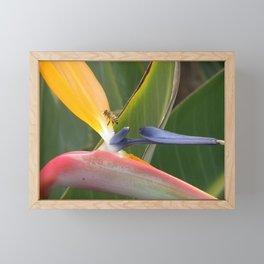 Exiting Paradise Framed Mini Art Print