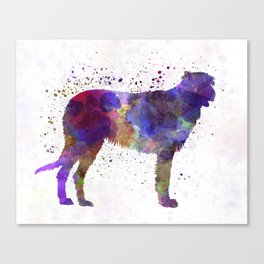 Irish Wolfhound in watercolor Canvas Print