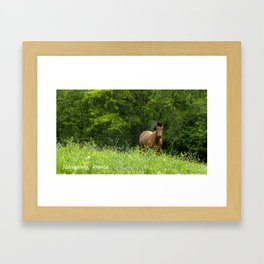 Horse in a pature Framed Art Print