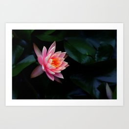 Birth of Beauty Art Print