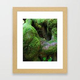 Redwood Moss Framed Art Print