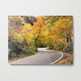 Winding Autumn Road Metal Print