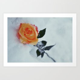 Rose in Snow Art Print