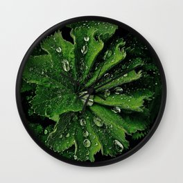 Dew On Rose Scented Geranium Leaves Wall Clock