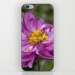 Autumn Anemone iPhone Skin