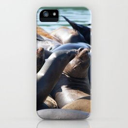 Sea Lions on the Dock iPhone Case