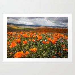 California Superbloom Art Print