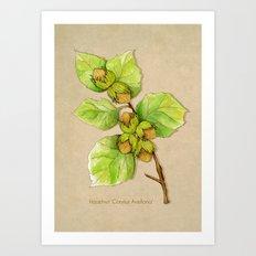 Corylus Avellana Art Print