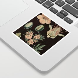 Botanical Almond Sticker