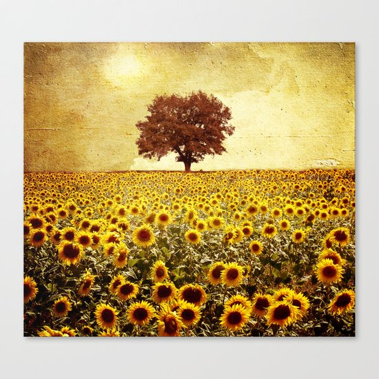 lone tree & sunflowers field Canvas Print