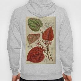 Disanthus cercidifolia 143 8716 Hoody