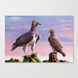 Martial Eagle Canvas Print