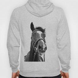 Horse Photo   Black and White Hoody