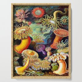 Under the Sea : Sea Anemones (Actiniae) by Ernst Haeckel Serving Tray