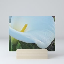 Calla Lily Mini Art Print