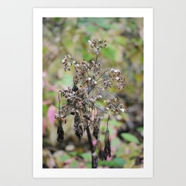 Dead Summer Plant Art Print