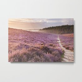 II - Path through blooming heather at sunrise, Posbank, The Netherlands Metal Print