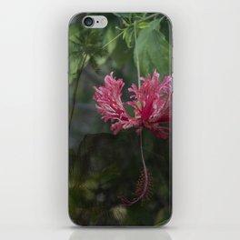 Paradise Cove iPhone Skin