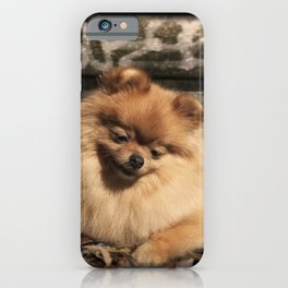 Pomeranian dog in the autumn sun iPhone Case