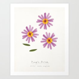 Purple Aster Modern Botanical Art Print